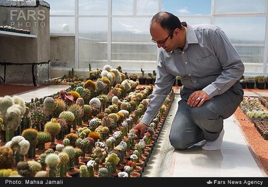 گلخانه جالب در بام خانه زوج تبریزی (عکس)