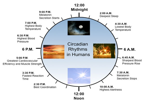 ساعت بدن تان را بدانید تا بیمار نشوید