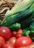 ناباروری،سرطان و پرخاشگری عصبی؛ نتیجه محصولات آلوده به سموم کشاورزی