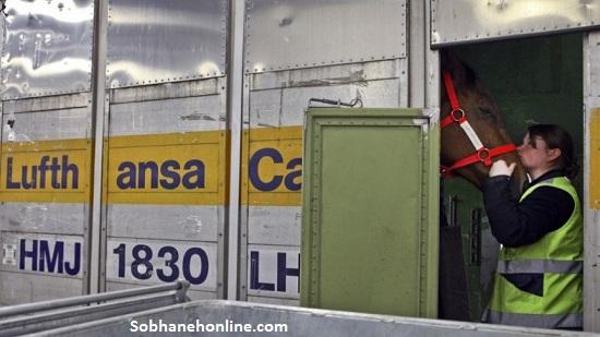 عجیبترین حمل و نقل هوایی جهان/ سفر 65 اسب با پرواز «فرست کلاس» به تهران! (+عکس)