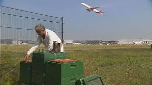 زنبور عسل مأمور محیط زیست