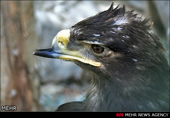 باغ پرندگان اصفهان (عکس)