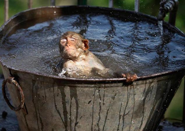 وقتی حیوانات هم در گرما گُر میگیرند (عکس)