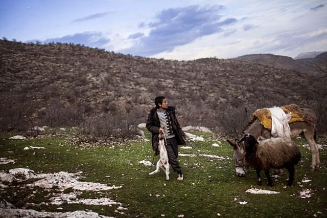 آشنایی با ایزدیان عراق (عکس)