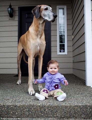 سگ هایی که از صاحبانشان بزرگتر هستند (عکس)