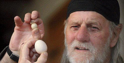 کوچکترین تخم مرغ در راه گینس! (+عکس)