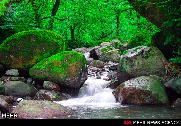 عکس از طبیعت زیبای شمال