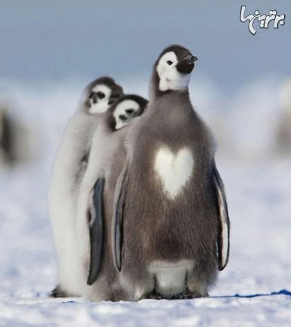 چه خالهای جالبی دارند این حیوانات! (+عکس)