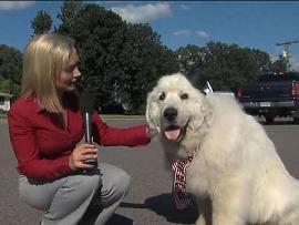 یک سگ شهردار «مینه سوتا» شد (+عکس)