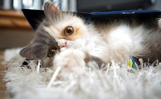 غمگین ترین گربه جهان! (+عکس)