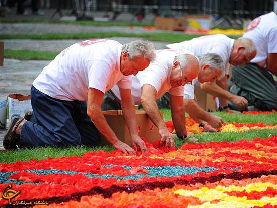 فرشی از گل در میدان بروکسل (+عکس)
