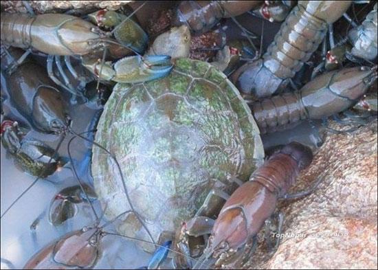 تجمع عجیب جانوارن آب زی (عکس)