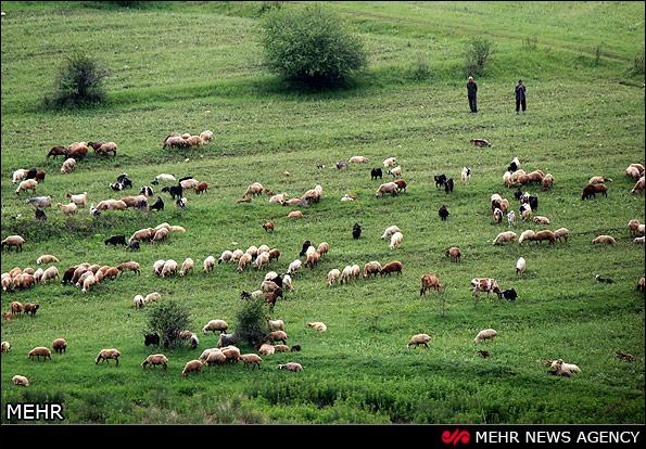 طبیعت جنگل های ارسباران - تبریز (عکس)