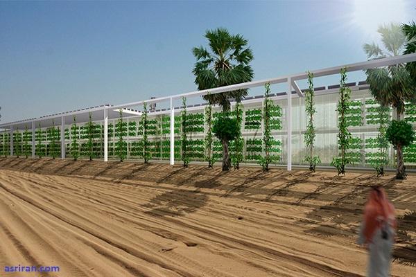 اُآکسیس؛ تبدیل بیابان به زمین کشاورزی