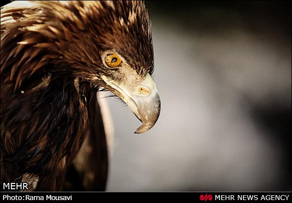حیات وحش گیلان (عکس)