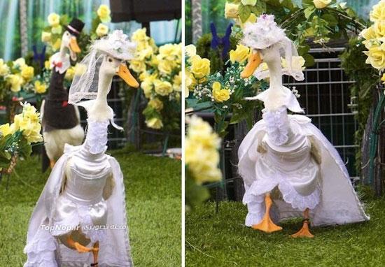 هفته مد اردک ها! (عکس)