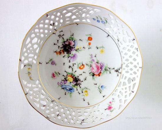 پذیرایی با ظروفی پر از مورچه! (عکس)