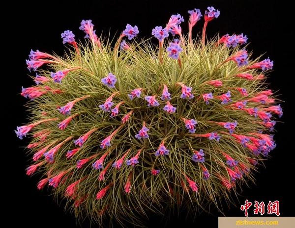 گیاهان عجیب و غریب!(عکس)
