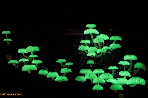 دنیای جادویی قارچ ها(+عکس)
