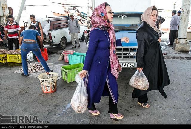 بازار ماهی و میگو در اسکله های بوشهر (عکس)
