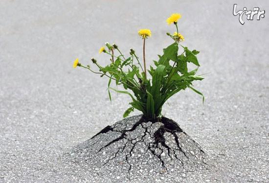 گیاهان تسلیم ناپذیر! (+عکس)