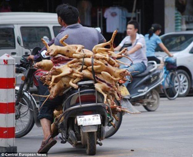 13 واقعیت چینی که کمتر شنیده اید (+عکس)