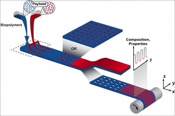 ورود نسل جدید پرینترهای سه بعدی به درمان سوختگی