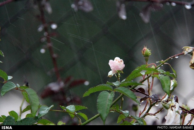 هوای بارانی آمل (عکس)