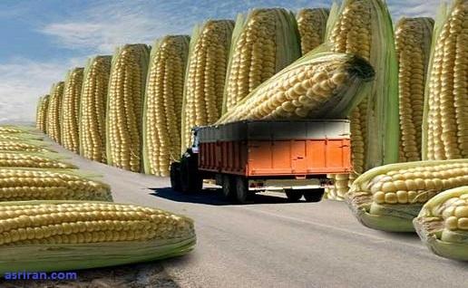 تولید محصولات کشاورزی برتر با فتوسنتز توربوشارژدار!