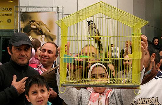 رهاسازی بلبل در تهران (+عکس)