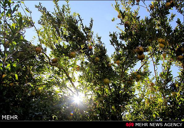 انارستان های سراب - آذربایجان (عکس)