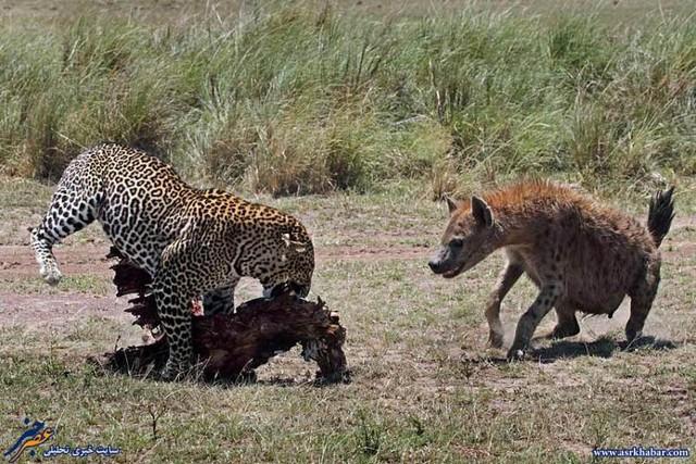 دیدنی هایی از دنیای حیوانات (عکس) - عصر دانش