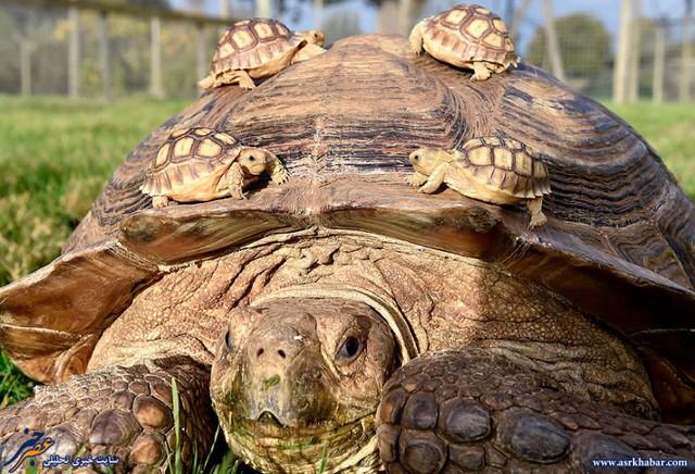 دیدنی هایی از دنیای حیوانات (عکس)