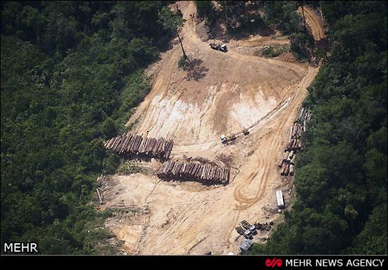 مرگ تدریجی آمازون (عکس)
