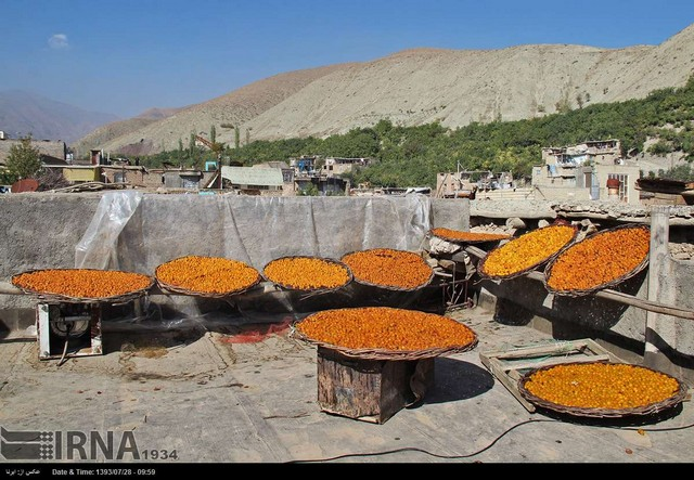 پایتخت آلوی ایران (عکس)