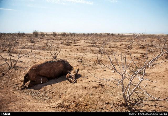 خشکسالی در کرمان (عکس)