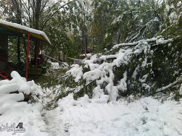 بارش برف در اردبیل/ عکس کاربران