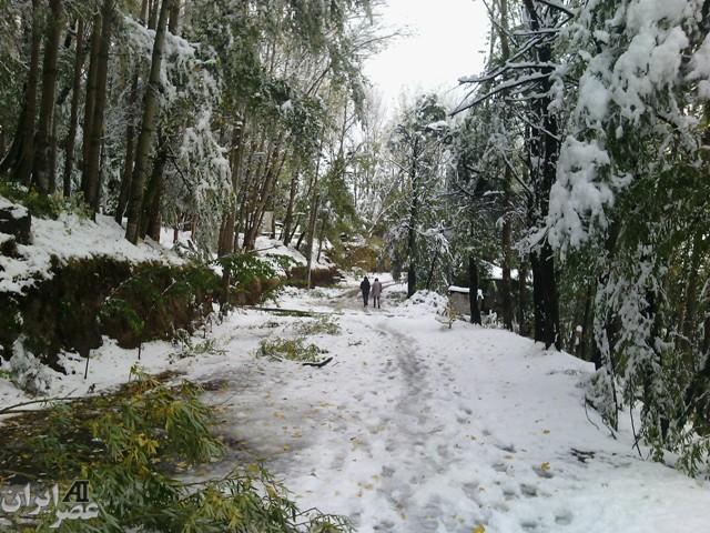 شکسته شدن درختان به دلیل برف سنگین در اردبیل/ عکس کاربران