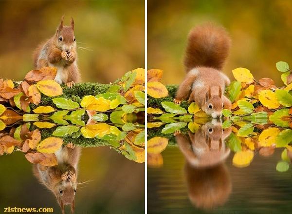 زیباترین تصاویر با همکاری طبیعت