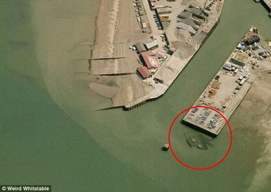 خرچنگ غول آسا همه را وحشت زده کرد! (عکس)