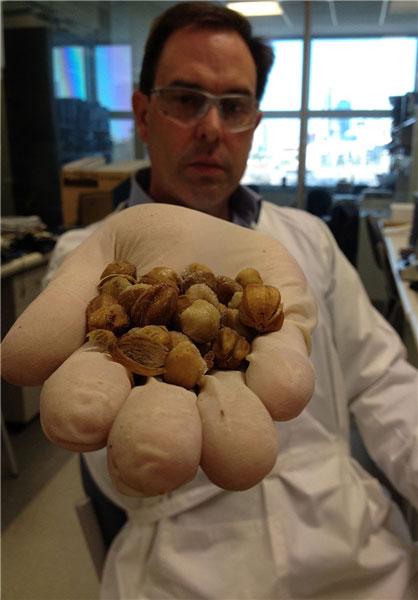 کشف ماده ضد سرطان از یک دانه نادر (+عکس)