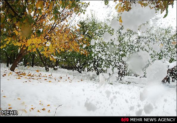 خسارت برف به باغات اهر - آذربایجان (عکس)