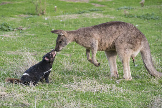 همزیستی مسالمت آمیز حیوانات (عکس)