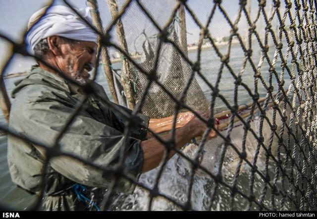 صید ماهی به شیوه سنتی - بندرعباس (عکس)