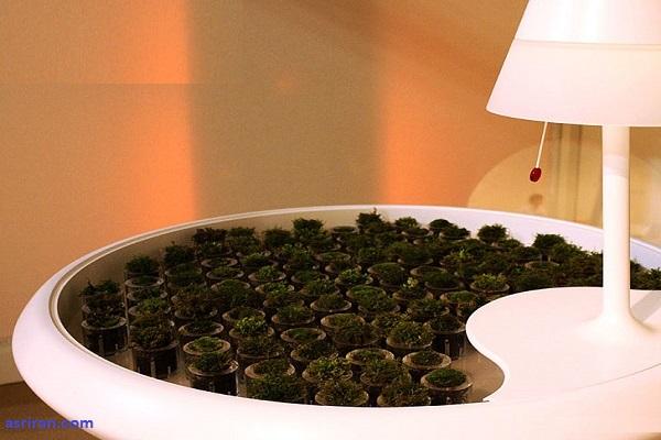 تولید برق از فتوسنتز با میز خزه ای