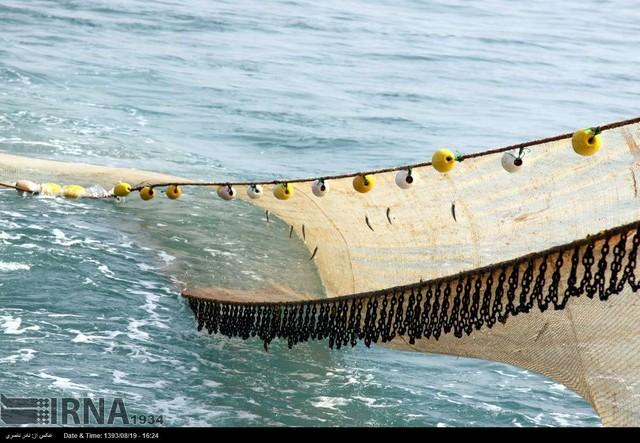 صید میگو ؛ بندر عباس (عکس)