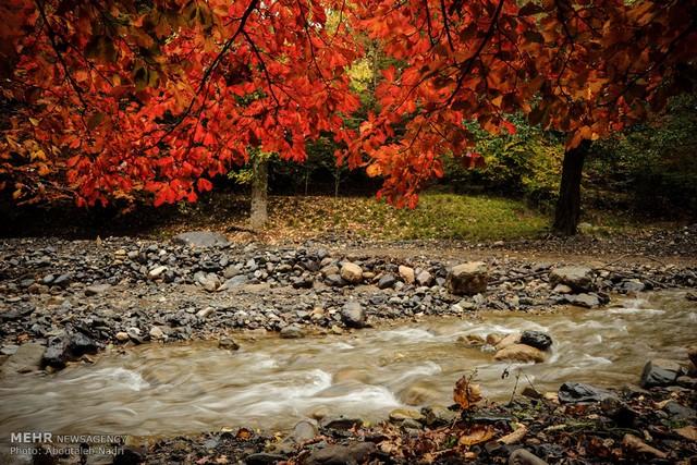 طبیعت پاییزی جنگل گلستان (عکس)