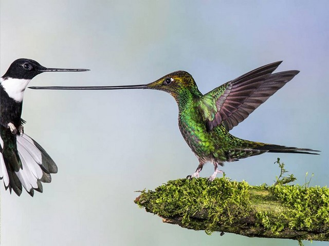 برندگان جایزه عکس حیات وحش 2014 (عکس)