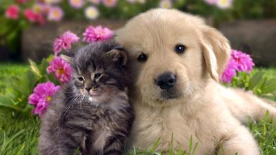 بیایید زمین را با حیوانات شریک شویم