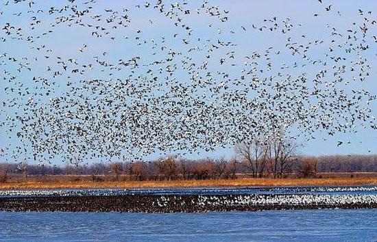 قتل عام میلیون ها پرنده مهاجر در فریدونکنار!